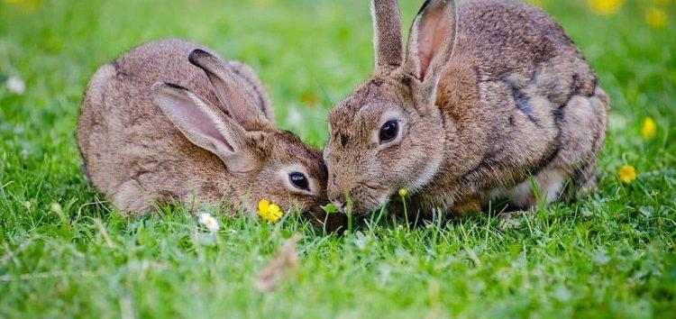 Reproducción en mamíferos del mismo sexo
